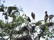 Rare birds crowd in Tram Chim National Park