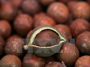 Macadamia growers advised to be cautious