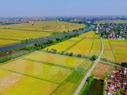 Demand for Vietnamese rice to be stable in Q3