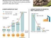 Vietnam: Raw cashew imports jump