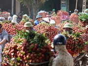 Luc Ngan lychee farmers enjoy early harvest