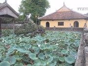 Precious white lotus species to be grown in Hue
