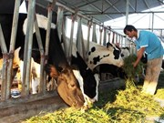 Young woman's successful dairy startup in Ha Nam