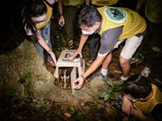 Special full-moon festival at Cuc Phuong National Park