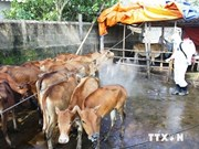 Vietnam proactive in preventing animal disease spread