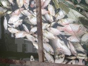 PM urges prompt delivery of relief following mass fish deaths