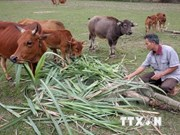 Vietnam shares poverty reduction experience with Laos