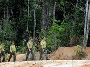 Tuyen Quang aims for more certified forest areas