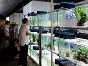 High-tech agriculture fair opens in HCM City