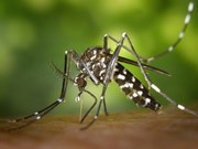 Philippines reports 10 more Zika cases