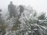Frost envelops Mau Son Mountain as cold front hits northern region