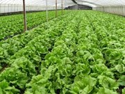 Organic farming not for mass production