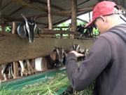 Ethnic man pursues natural farming model