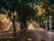 Most beautiful Hanoi street in Autumn