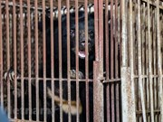 Last three captive bears in Lang Son rescued