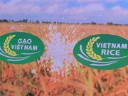 Vietnamese rice gets official brand name