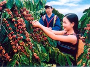 Coffee sector: performance yet to live up to potential