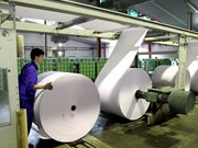 Paper industry needs plans to sprout