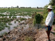Mekong Delta region adapts to climate change