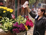 Hanoi streets adorned with lilies