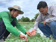 Vietnamese watermelon seeds exported to Japan for first time