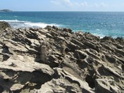 Hon Do coral island - new destination for summer retreat