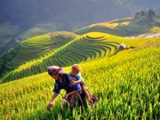 CNBC: Mu Cang Chai should top 2020 travel list