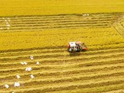Mekong Delta enjoys bumper rice crop