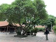 Vinh Nghiem Pagoda where world documentary heritage is kept