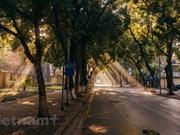 Hanoi's most romantic street in autumn