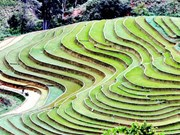 Alluring terraced rice fields  in Son La