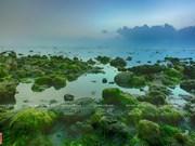 Beautiful seaweed field in Ninh Thuan