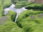 Vietnam tourism: Pristine moss-covered stones in Binh Thuan