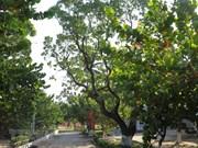Greenery in Truong Sa island district