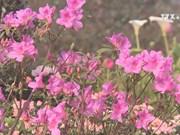 Water rail flower festival in Sa Pa