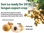Son La ready for 2019 longan export crop