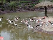 Walk into wildlife in Vinpearl Safari