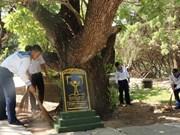 Heritage trees on Truong Sa archipelago