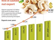 Vietnam ranks first in cashew nut export