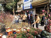 Hanoi opens 64 spring flower markets to welcome Tet