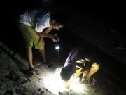 Tourists hunt rock crabs on Ly Son island