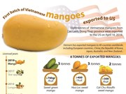 First batch of Vietnamese mangoes exported to US