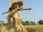 Festival honouring wet rice held in Quang Ngai