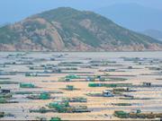 Commercial lobster farming on Binh Ba island