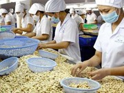 Cashew nut exports to China surge