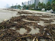 Da Nang: beach cleaned up after heavy storm