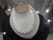 Phu Quoc pearl breeding a success