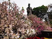 Hanoi cherry blossom festival