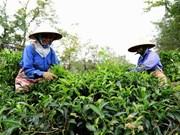 Tea exports up 15.4 percent in Q1
