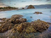 Stunning coral reefs of Hon Yen island